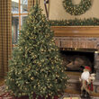 Douglas Fir Unlit Tree