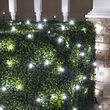 4' x 6' Cool White Twinkle 5mm LED Christmas Net Lights, 100 Lights on Green Wire