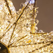 Shimmering Warm & Cool White LED Crystal 8 Point Star Tree Topper