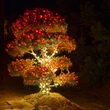 Kringle Traditions 5mm Red LED Christmas Lights on Green Wire