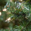 Douglas Fir Prelit Holiday Garland, Clear Lights