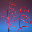 Standing Flamingo, Pink Lights