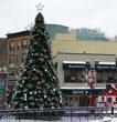 Giant Everest Fir Prelit Commercial Tree