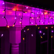 70 Amber, Purple M5 LED Icicle Lights on Black Wire