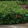 C7 Green / Red OptiCore Christmas LED Pathway Lights, 100 Lights, 7.5 Inch Stakes, 100'