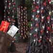 """20"""" x 45"""" Red, Cool White StretchNet Pro 5mm LED Christmas Trunk Wrap Lights, 50 Lights on Brown Wire"""