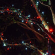 5mm SoftTwinkle Wide Angle Red, Cool White LED Christmas Lights on Green Wire
