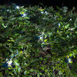 4' x 6' Cool White SoftTwinkle 5mm LED Christmas Net Lights, 70 Lights on Green Wire