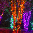 Commercial 5mm Wide Angle Amber LED Christmas Lights on Green Wire