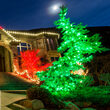 Commercial 5mm Wide Angle Green LED Christmas Lights on Green Wire