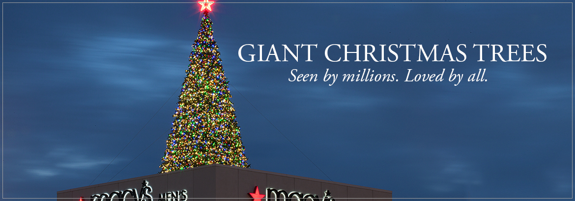 Giant Everest Christmas Trees