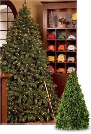 sequoia commercial christmas trees