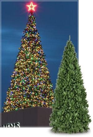 Giant Everest Commercial Christmas Tree