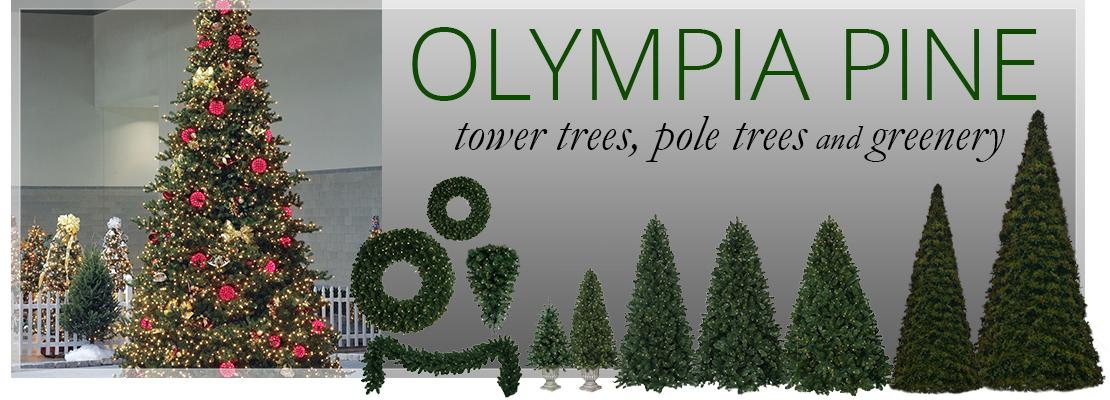 Olympia Pine