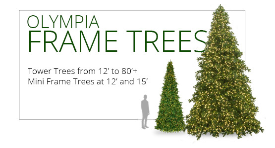 Olympia Pine Frame Trees