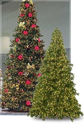 Olympia Pine Commercial Christmas Tree