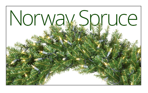 Norway Spruce Wreaths