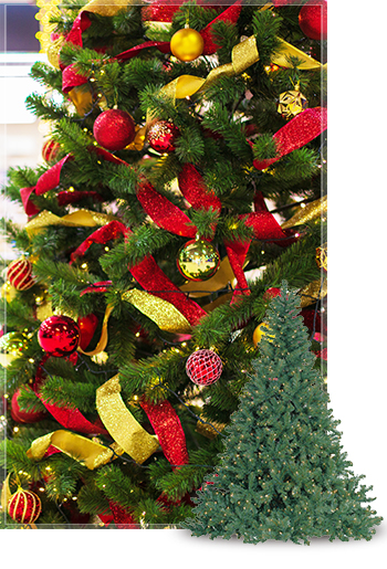 Oregon Fir Commercial Christmas Tree