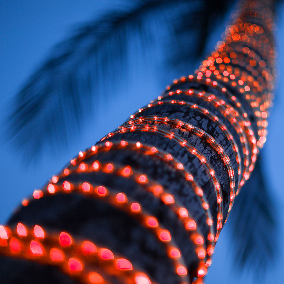 Palm Tree Wrapped With Rope Light